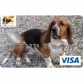 Carolina Basset Hound Rescue Credit Card